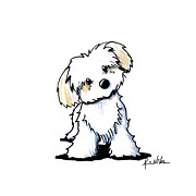 Caricature Drawings Metal Prints - Quizzical Havanese Metal Print by Kim Niles