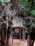Logging Camp Prints - R-Ranch Shack 2 Print by Vicki Buckler