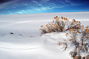 Snow Drifts Photos - Rabbit Brush Ridge Winter Landscape by Julie Magers Soulen