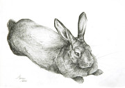 White Drawings Posters - Rabbit Poster by Jeanne Maze