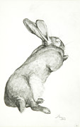 Pencil Sketch Framed Prints - Rabbit Sleeping Framed Print by Jeanne Maze