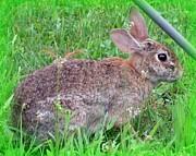 Gail Matthews - Rabbit so Still