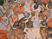 Hares Prints - Rabbit Spread Print by Ditz