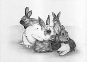 Graphite Drawings Prints - Rabbits Rabbits and more Rabbits Print by Nan Wright