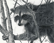 Photo Pastels Posters - Raccoon - Charcoal Experiment Poster by Joshua Martin