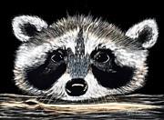 Lyn DeLano - Raccoon