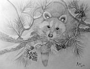 Raccoon Drawings - Raccoon by Peggy Miller
