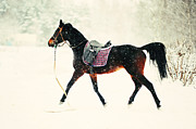 Paintery Prints - Race in the Snow 8 Print by Jenny Rainbow