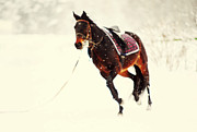 Horse Run Photos - Race in the Snow I by Jenny Rainbow