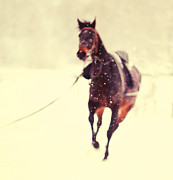 Race In The Snow Print by Jenny Rainbow