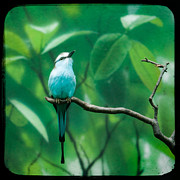Exotic Bird Prints - Racquet tailed roller Print by Gary Heller