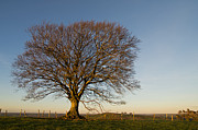 Pete Hemington - Raddon Hill Top Tree