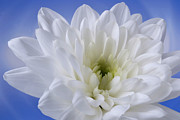 Portrait Photo Originals - Radiant White. by Terence Davis