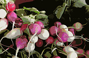 Karyn Robinson Metal Prints - Radishes Metal Print by Karyn Robinson