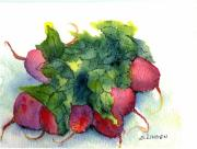 Fruits And Vegetables Framed Prints - Radishes Framed Print by Sandy Linden