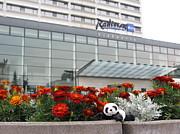 Radisson Blu Lietuva. Baby Panda Likes It Print by Ausra Paulauskaite