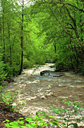 Most Popular Digital Art - Raging Waters - West Virginia Backroad by Paulette Wright