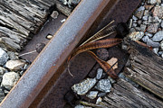 Lynn Palmer - Seed Pod Rail and Tie