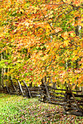 Split Rail Fence Photo Prints - Rail Fence Fall Color Print by Thomas R Fletcher