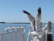 Flying Seagulls Originals - Railing of Seagulls by Patricia Twardzik