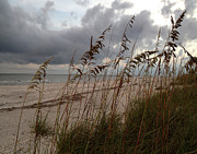 Rosie Brown - Rain and Sea Oats