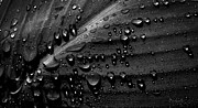 Macro Photo Framed Prints - Rain Framed Print by Bob Orsillo