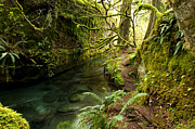 Randy Moss Photo Prints - Rain Forest 2 Print by Randy and Donna Giesbrecht