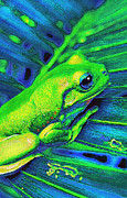 Rain Digital Art Metal Prints - Rain Forest Tree Frog Metal Print by Jane Schnetlage