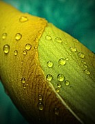 Earthy Water Prints - Rain Wrapped Print by Chris Berry