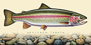 Trout Paintings - Rainbow and Stones by JQ Licensing