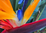 Floral Photography Prints - Rainbow Bright Print by Kristine Merc