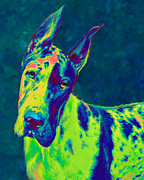 Dogs Digital Art Metal Prints - Rainbow Dane Metal Print by Jane Schnetlage