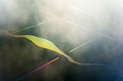 Jenny Rainbow - Rainbow Earth 2. Somewhere over Netherlands