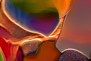 Macro Photos Glass Art - Rainbow Emperor by Omaste Witkowski
