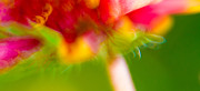 Motion Prints - Rainbow Flower Print by Darryl Dalton