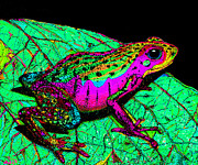 Frog Drawings - Rainbow Frog 3 by Nick Gustafson