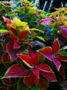 Kathie McCurdy - Rainbow Garden