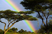 Savannahs Framed Prints - Rainbow in ethiopia Framed Print by Gilad Flesch