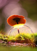 Round Fungi Prints - Rainbow Print by Kent Mathiesen