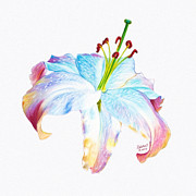 Environment Pastels Prints - Rainbow Lily Print by Rebelwolf