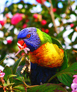 Margaret Saheed Prints - Rainbow Lorikeet With Flower Print by Margaret Saheed