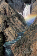 Yellowstone Photos - Rainbow on the Lower Falls by Sandra Bronstein