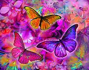 Rainbow Orchid Morpheus Print by Alixandra Mullins