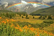 Adam Jewell - Rainbow Over Wildflowers...