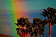 Rainbow Colors Posters - Rainbow Palms in Florida Poster by Susanne Van Hulst