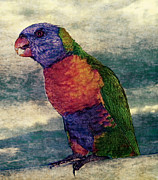 Photo Manipulation Photo Posters - Rainbow Parrot Poster by Digital Art Photo Studio