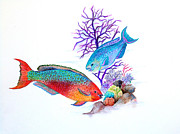 Reef Fish Pastels Posters - Rainbow Parrot Fish Poster by Karin Best