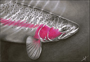 Rainbow Trout Drawings Prints - Rainbow Release Print by Nick Laferriere