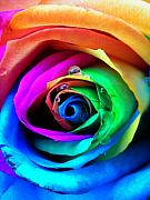 Raindrops Photo Prints - Rainbow Rose Print by Juergen Weiss