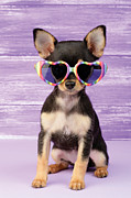 Puppy Digital Art Metal Prints - Rainbow Sunglasses Metal Print by Greg Cuddiford